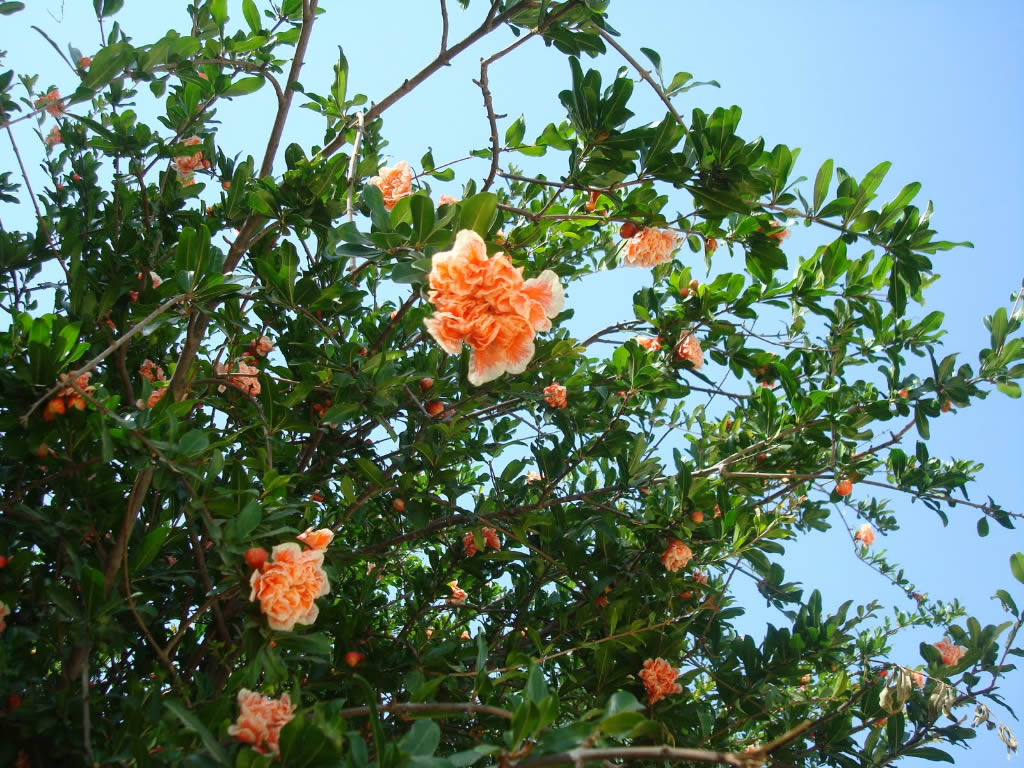Arboles frutales viveros montero plantas viveros montero for Viveros de arboles en madrid