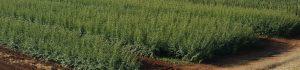 cabecera-viveros-montero-frutales-viveros-plantas