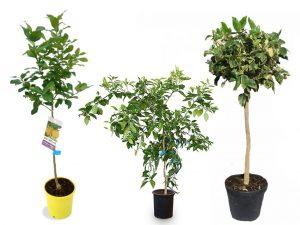 vivero-en-maceta-plantas-en-maceta-arboles-en-maceta-viveros-montero