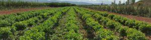 viveros-montero-frutales-arboles-plantas-viveros